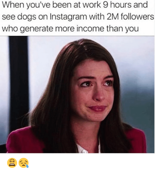 Dogs, Instagram, and Memes: When you've been at work 9 hours and  see dogs on Instagram with 2M followers  who generate more income than you 😩😪