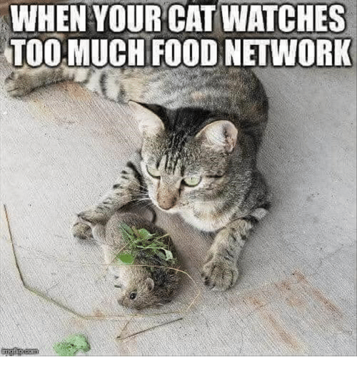 Food, Food Network, and Too Much: WHENYOUR CAT WATCHES  TOO MUCH FOOD NETWORK