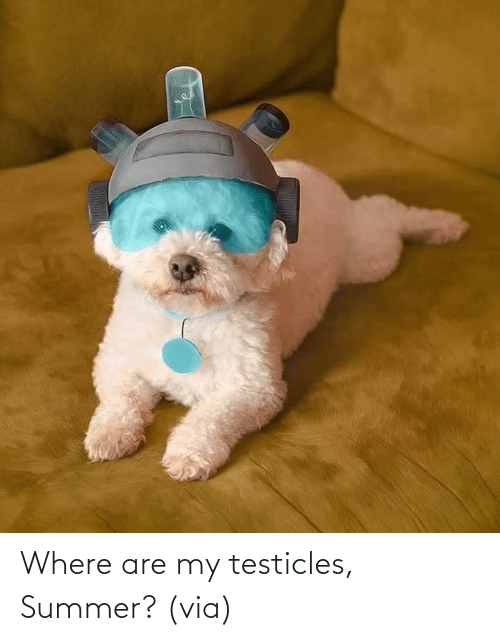 Summer: Where are my testicles, Summer? (via)