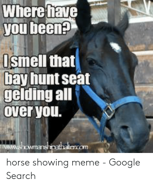 Google, Meme, and Google Search: Where fhave  you been?  Ismell that  bay hunt seat  gelding all  Over you.  ww.showmanshipathalencom horse showing meme - Google Search