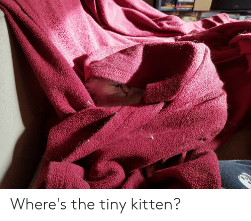 Tiny, Kitten, and  Tiny Kitten: Where's the tiny kitten?