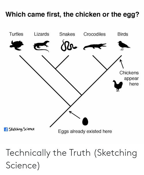 Chicken: Which came first, the chicken or the egg?  Turtles  Lizards  Snakes  Crocodiles  Birds  Chickens  appear  here  A Sketching Science  Eggs already existed here Technically the Truth (Sketching Science)