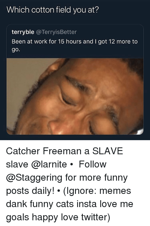 Cats, Dank, and Funny: Which cotton field you at?  terryble @TerryisBetter  Been at work for 15 hours and I got 12 more to  go. Catcher Freeman a SLAVE slave @larnite • ➫➫➫ Follow @Staggering for more funny posts daily! • (Ignore: memes dank funny cats insta love me goals happy love twitter)
