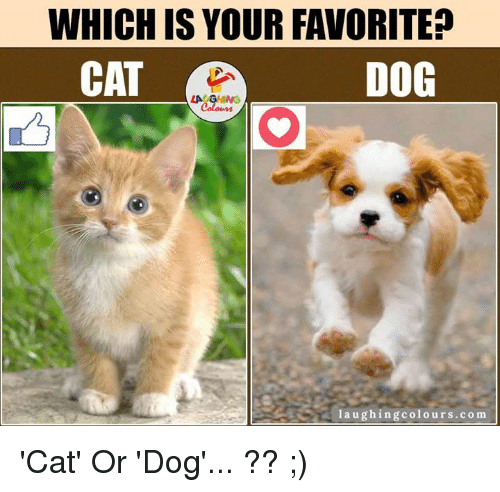 Dog Laughing: WHICH IS YOUR FAVORITE?  CAT  DOG  laughing colours.com 'Cat' Or 'Dog'... ?? ;)
