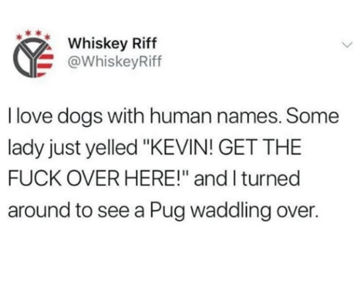 "Dogs, Love, and Fuck: Whiskey Riff  @WhiskeyRiff  I love dogs with human names. Some  lady just yelled ""KEVIN! GET THE  FUCK OVER HERE!"" and I turned  around to see a Pug waddling over."