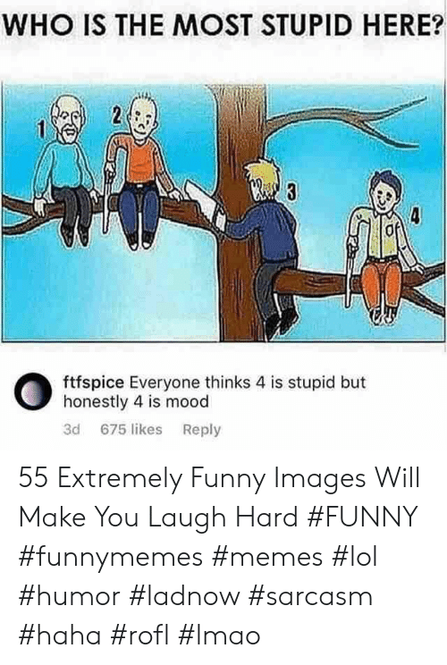 Funny, Lmao, and Lol: WHO IS THE MOST STUPID HERE?  ftfspice Everyone thinks 4 is stupid but  honestly 4 is mood  3d 675 likes Reply 55 Extremely Funny Images Will Make You Laugh Hard #FUNNY #funnymemes #memes #lol #humor #ladnow #sarcasm #haha #rofl #lmao