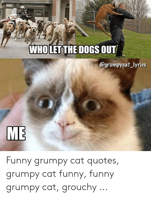 WHO LET THE DOGS OUT Lyrics ME Funny Grumpy Cat Quotes