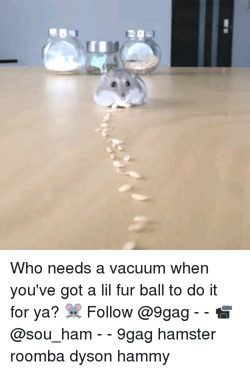 vacuums: Who needs a vacuum when you've got a lil fur ball to do it for ya? 🐭 Follow @9gag - - 📹 @sou_ham - - 9gag hamster roomba dyson hammy