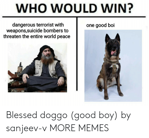 Blessed, Dank, and Memes: WHO WOULD WIN?  dangerous terrorist with  weapons,suicide bombers to  threaten the entire world peace  one good boi Blessed doggo (good boy) by sanjeev-v MORE MEMES
