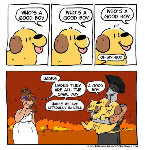 hades: WHO'5 A  GOOD BOY  WHO'5 A  GOOD BOY  WHO'5 A  GOOD BOy  OH MY GOD  HADES  HADES THEYA GOOD  ARE ALL THEBOY  SAME BOy  HADES WE ARE  LITERALLY IN HELL  FLOCCINAUCINIHILIPILIFICATIONA.TUMBLR.COM