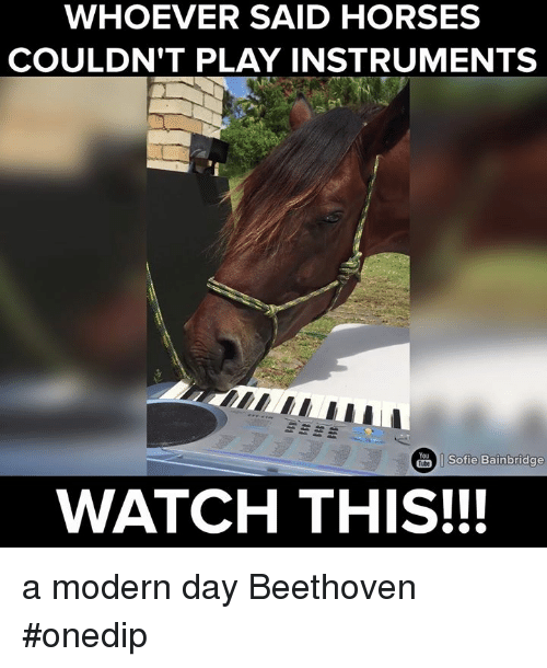 Dank, Horses, and Beethoven: WHOEVER SAID HORSES  COULDN'T PLAY INSTRUMENTS  Sofie Bainbridge  Tube  WATCH THIS!!! a modern day Beethoven #onedip