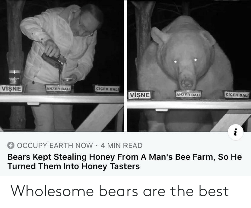 Bears: Wholesome bears are the best