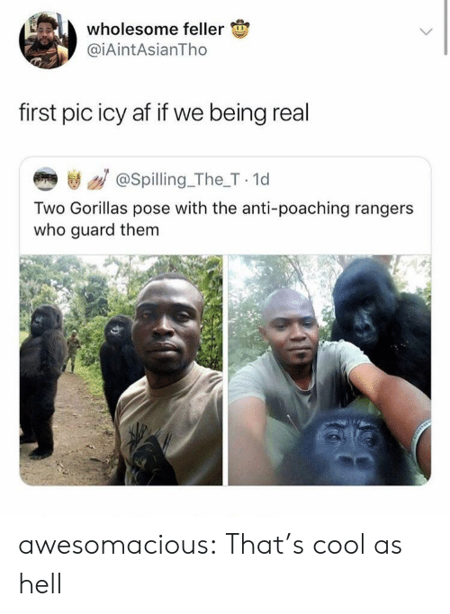 thats cool: wholesome feller  @iAintAsianTho  first pic icy af if we being real  き / @spilling_The_T 1d  Two Gorillas pose with the anti-poaching rangers  who guard them awesomacious:  That's cool as hell
