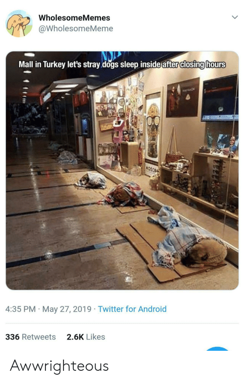 Android, Aww, and Dogs: WholesomeMemes  @WholesomeMeme  Mall in Turkey let's stray dogs sleep inside after closing hours  4:35 PM May 27, 2019 Twitter for Android  2.6K Likes  336 Retweets Awwrighteous