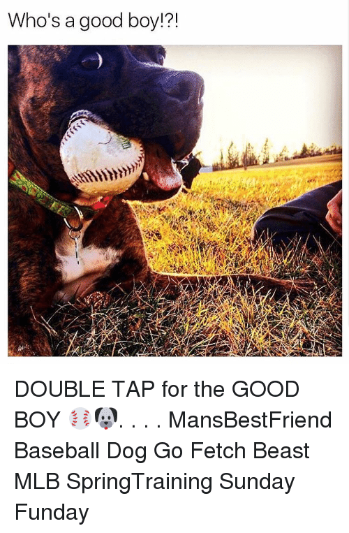 Sunday Funday: Who's a good boy  121 DOUBLE TAP for the GOOD BOY ⚾️🐶. . . . MansBestFriend Baseball Dog Go Fetch Beast MLB SpringTraining Sunday Funday