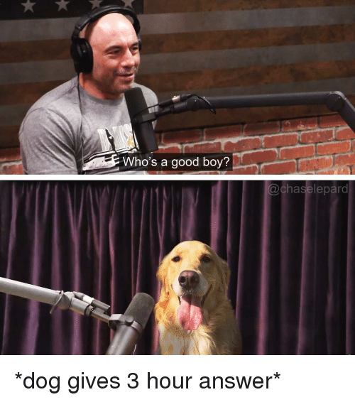 Funny, Good, and Boy: Who's a good boy?  chaselepard *dog gives 3 hour answer*