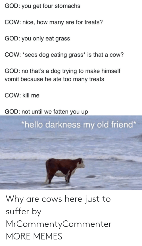suffer: Why are cows here just to suffer by MrCommentyCommenter MORE MEMES