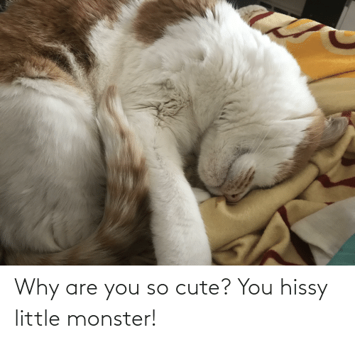 Hissy: Why are you so cute? You hissy little monster!