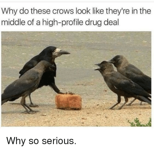 drug deal: Why do these crows look like they're in the  middle of a high-profile drug deal Why so serious.