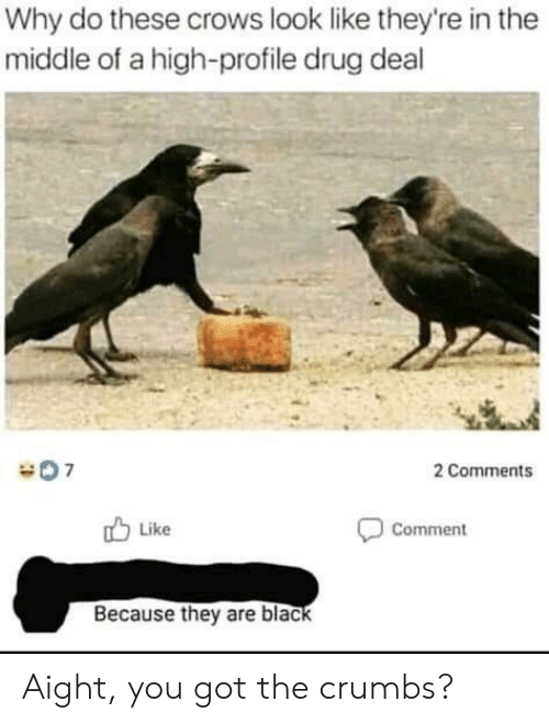 drug deal: Why do these crows look like they're in the  middle of a high-profile drug deal  2 Comments  Like  Comment  Because they are black Aight, you got the crumbs?