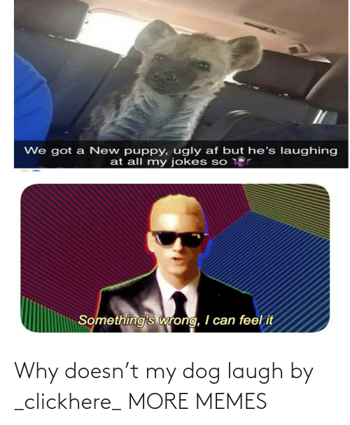 My Dog: Why doesn't my dog laugh by _clickhere_ MORE MEMES