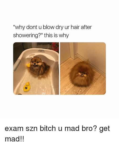 """Bitch, Hair, and Girl Memes: """"why dont u blow dry ur hair after  showering?"""" this is why exam szn bitch u mad bro? get mad!!"""