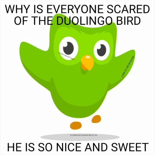 Help, Nice, and Why: WHY IS EVERYONE SCARED  OF THE DUOLINGO BIRD  PLS SEND HELP HE MADE ME DO THIS  HE IS SO NICE AND SWEET