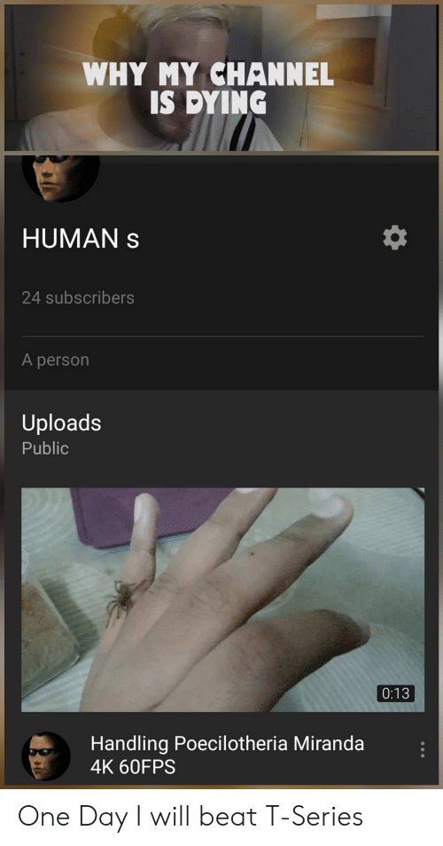 Human, Miranda, and One: WHY MY CHANNEL  IS DYING  HUMAN  24 subscribers  A person  Uploads  Public  0:13  Handling Poecilotheria Miranda  4K 60FPS One Day I will beat T-Series