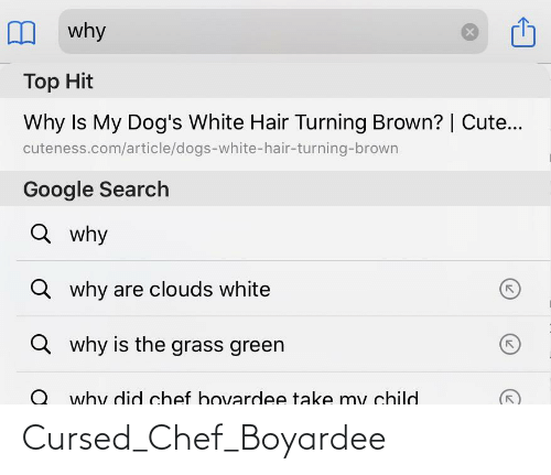 Cute, Dogs, and Google: why  Top Hit  Why Is My Dog's White Hair Turning Brown? | Cute...  cuteness.com/article/dogs-white-hair-turning-brown  Google Search  Q why  Q why are clouds white  Q why is the grass green  why did chef bovardee take my child Cursed_Chef_Boyardee
