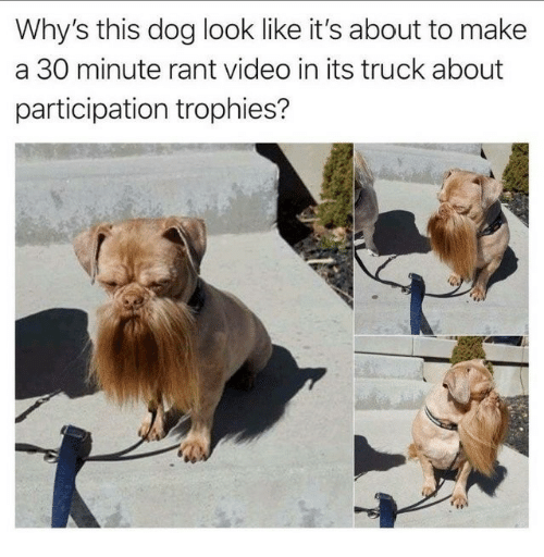 Video, Dog, and Make A: Why's this dog look like it's about to make  a 30 minute rant video in its truck about  participation trophies?