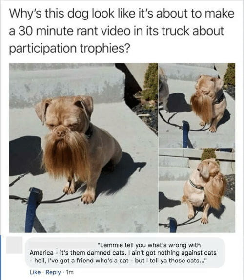 "aint: Why's this dog look like it's about to make  a 30 minute rant video in its truck about  participation trophies?  ""Lemmie tell you what's wrong with  America - it's them damned cats. I ain't got nothing against cats  - hell, I've got a friend who's a cat - but I tell ya those cats...""  Like · Reply · 1m"