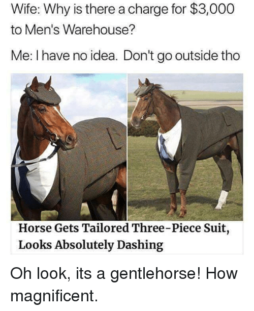 Warehouse: Wife: Why is there a charge for $3,000  to Men's Warehouse?  Me: I have no idea. Don't go outside tho  Horse Gets Tailored Three-Piece Suit  Looks Absolutely Dashing Oh look, its a gentlehorse! How magnificent.