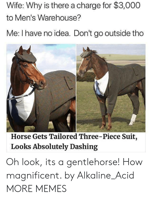 Warehouse: Wife: Why is there a charge for $3,000  to Men's Warehouse?  Me: I have no idea. Don't go outside tho  Horse Gets Tailored Three-Piece Suit  Looks Absolutely Dashing Oh look, its a gentlehorse! How magnificent. by Alkaline_Acid MORE MEMES