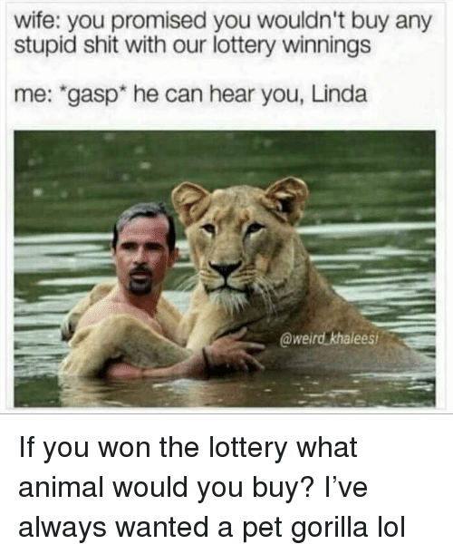 "Funny, Lol, and Lottery: wife: you promised you wouldn't buy any  stupid shit with our lottery winnings  me: ""gasp* he can hear you, Linda  @weird khalees If you won the lottery what animal would you buy? I've always wanted a pet gorilla lol"