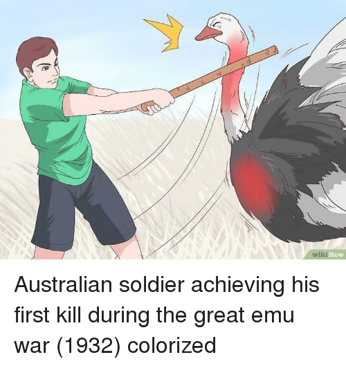 emu: wiki  How Australian soldier achieving his first kill during the great emu war (1932) colorized