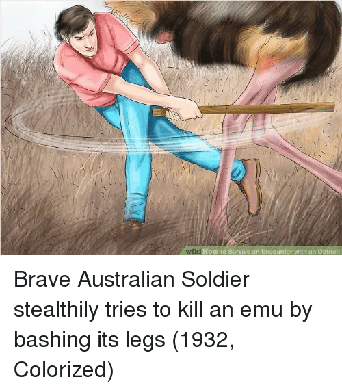 emu: wiki  ki How to Survive an Encounter with an Ostrich Brave Australian Soldier stealthily tries to kill an emu by bashing its legs (1932, Colorized)