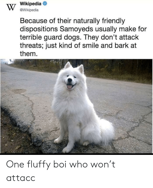 Who Won: Wikipedia  @Wikipedia  Because of their naturally friendly  dispositions Samoyeds usually make for  terrible guard dogs. They don't attack  threats; just kind of smile and bark at  them One fluffy boi who won't attacc
