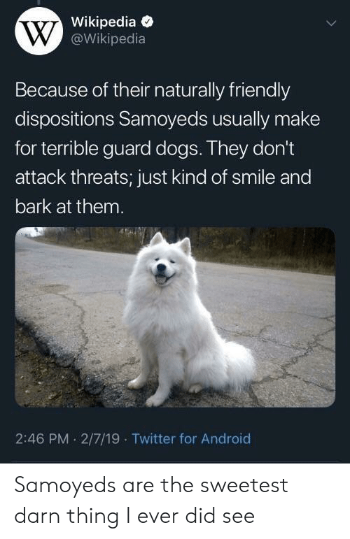 Android, Dogs, and Twitter: Wikipedia  @Wikipedia  Because of their naturally friendly  dispositions Samoyeds usually make  for terrible guard dogs. They don't  attack threats; just kind of smile and  bark at them  2:46 PM . 2/7/19 Twitter for Android Samoyeds are the sweetest darn thing I ever did see
