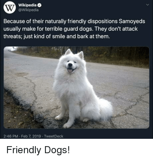 Dogs, Wikipedia, and Smile: Wikipediae  @Wikipedia  Because of their naturally friendly dispositions Samoyeds  usually make for terrible guard dogs. They don't attack  threats; just kind of smile and bark at them.  2:46 PM-Feb 7, 2019 TweetDeck Friendly Dogs!