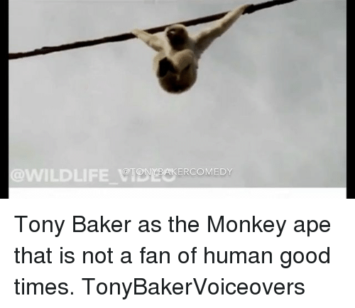 Bakerate: WILDLIFE CIONYBAKERCOMEDY Tony Baker as the Monkey ape that is not a fan of human good times. TonyBakerVoiceovers