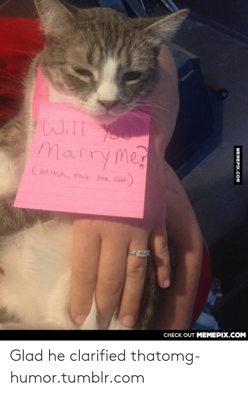 Clarified: Will You  Marryme  (mitch,  not the Cat  CHECK OUT MEMEPIX.COM  МЕМЕРIХ.Сом Glad he clarified thatomg-humor.tumblr.com