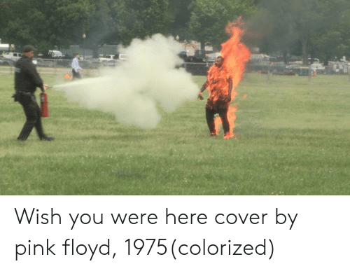 🅱️ 25+ Best Memes About Wish You Were Here | Wish You Were