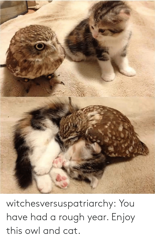 Enjoy: witchesversuspatriarchy:  You have had a rough year. Enjoy this owl and cat.