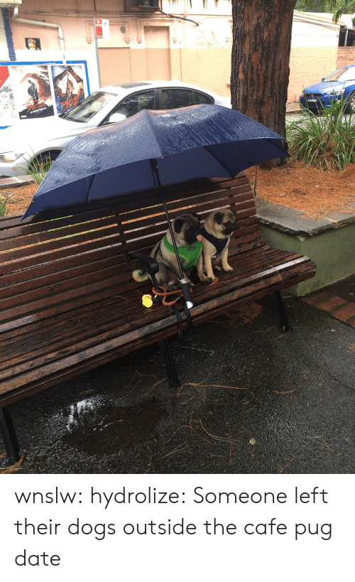 Dogs, Tumblr, and Blog: wnslw:  hydrolize:  Someone left their dogs outside the cafe  pug date