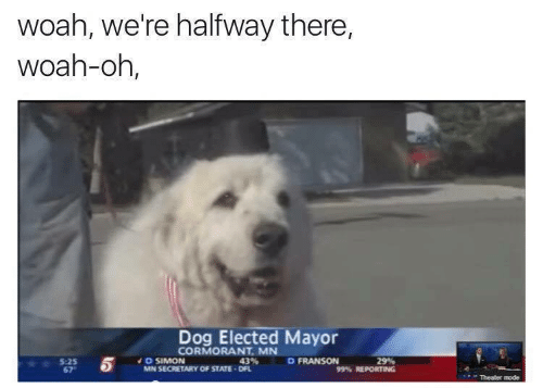 Simon: woah, we're halfway there,  woah-oh,  Dog Elected Mayor  CORMORANT. MN  矕 5 ' % REPORTING  D SIMON  MN SECRETARY OF STATE DFL  D FRANSON  5:25  67  Theater mode