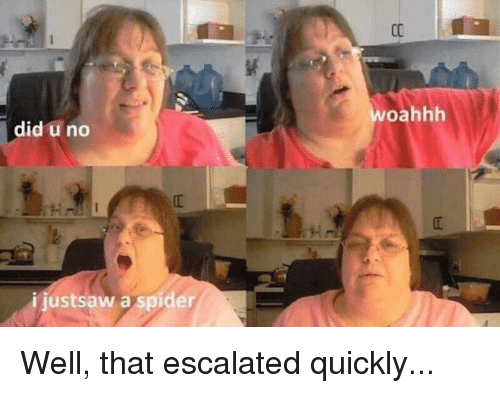 Spider, Did, and That Escalated Quickly: woahhh  did u no  ijustsaw a spider