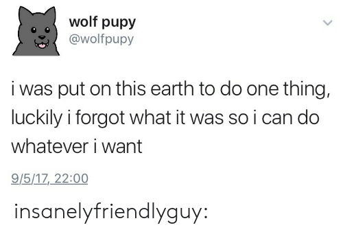 One Thing: wolf pupy  @wolfpupy  i was put on this earth to do one thing,  luckily i forgot what it was so i can do  whatever i want  9/5/17, 22:00 insanelyfriendlyguy: