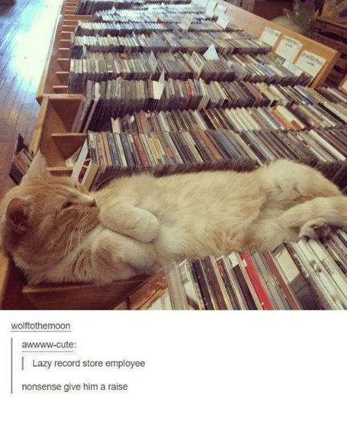 record store: wolftothemoon  awwww-cute:  I Lazy record store employee  nonsense give him a raise