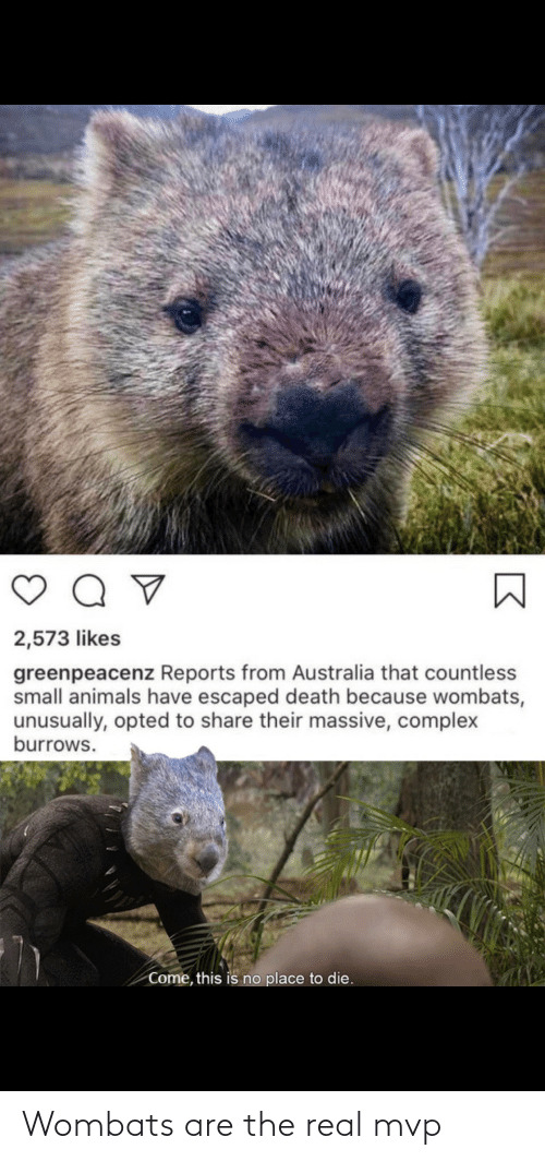 real: Wombats are the real mvp