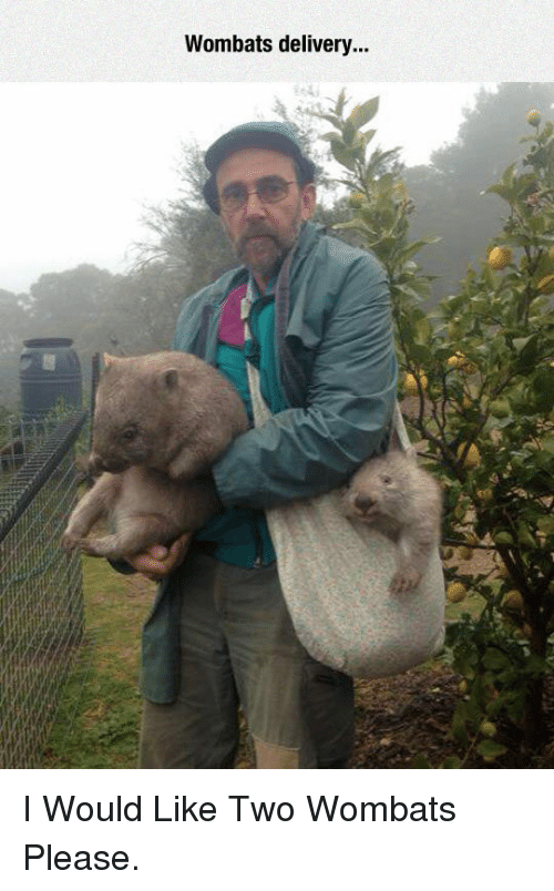 wombats: Wombats delivery.. <p>I Would Like Two Wombats Please.</p>